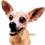 taco_bell_chihuahua-150x150